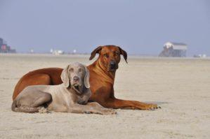Urlaub mit Hund in der Bude54 in St. Peter-Ording